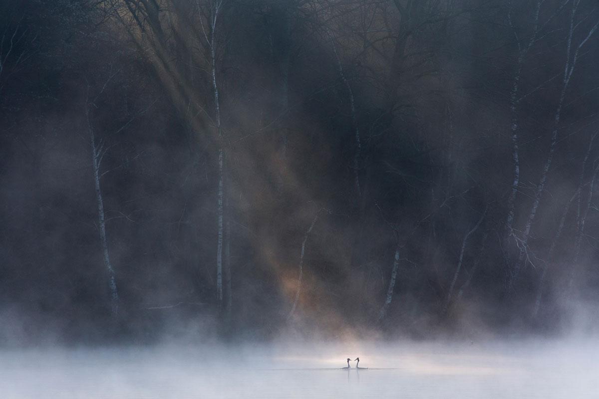 foto van twee zwanen op het een meer met hoofden naar elkaar heel klein met veel water en lucht