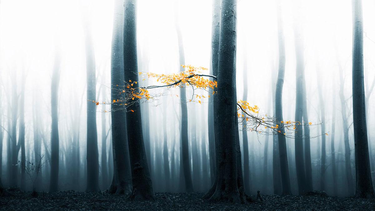 foto van blauwgrijs bos waarvan de bovenkant van de bomen in een wit licht verdwijnt en een paar takken met gele bladeren in het midden