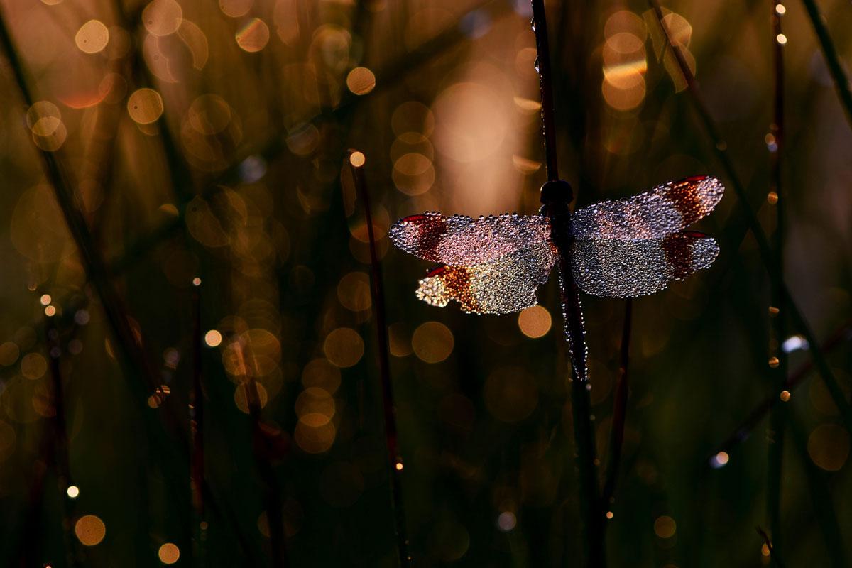 foto: Quinten Bulte 17 jaar Dalfsen | WNF Young Talent Award, foto van vlinder in de nacht