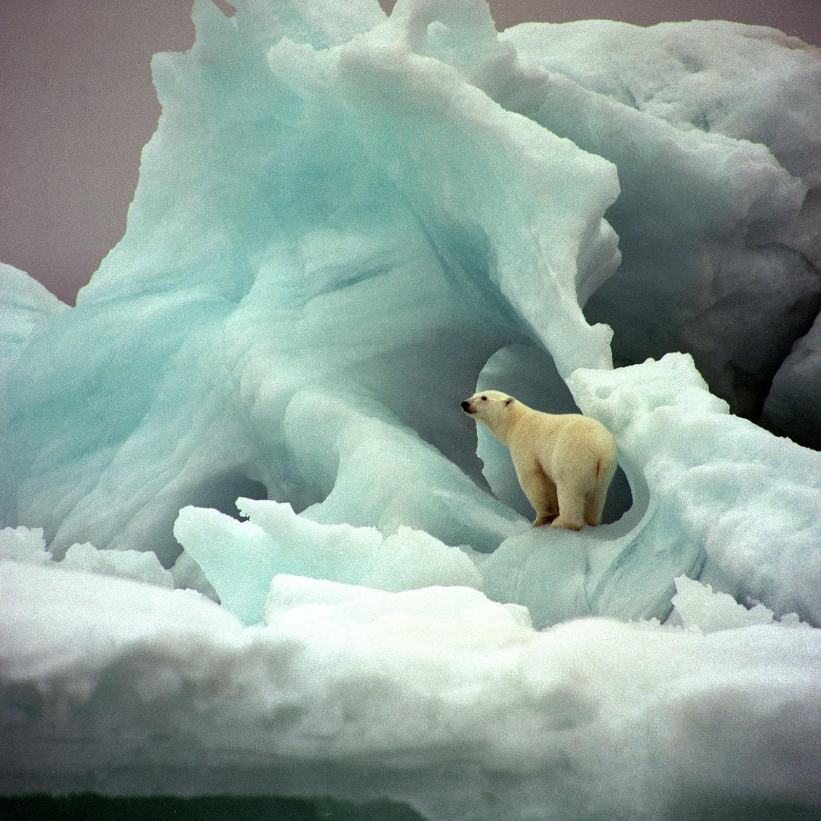 foto van ijsbeer in groenig ijs