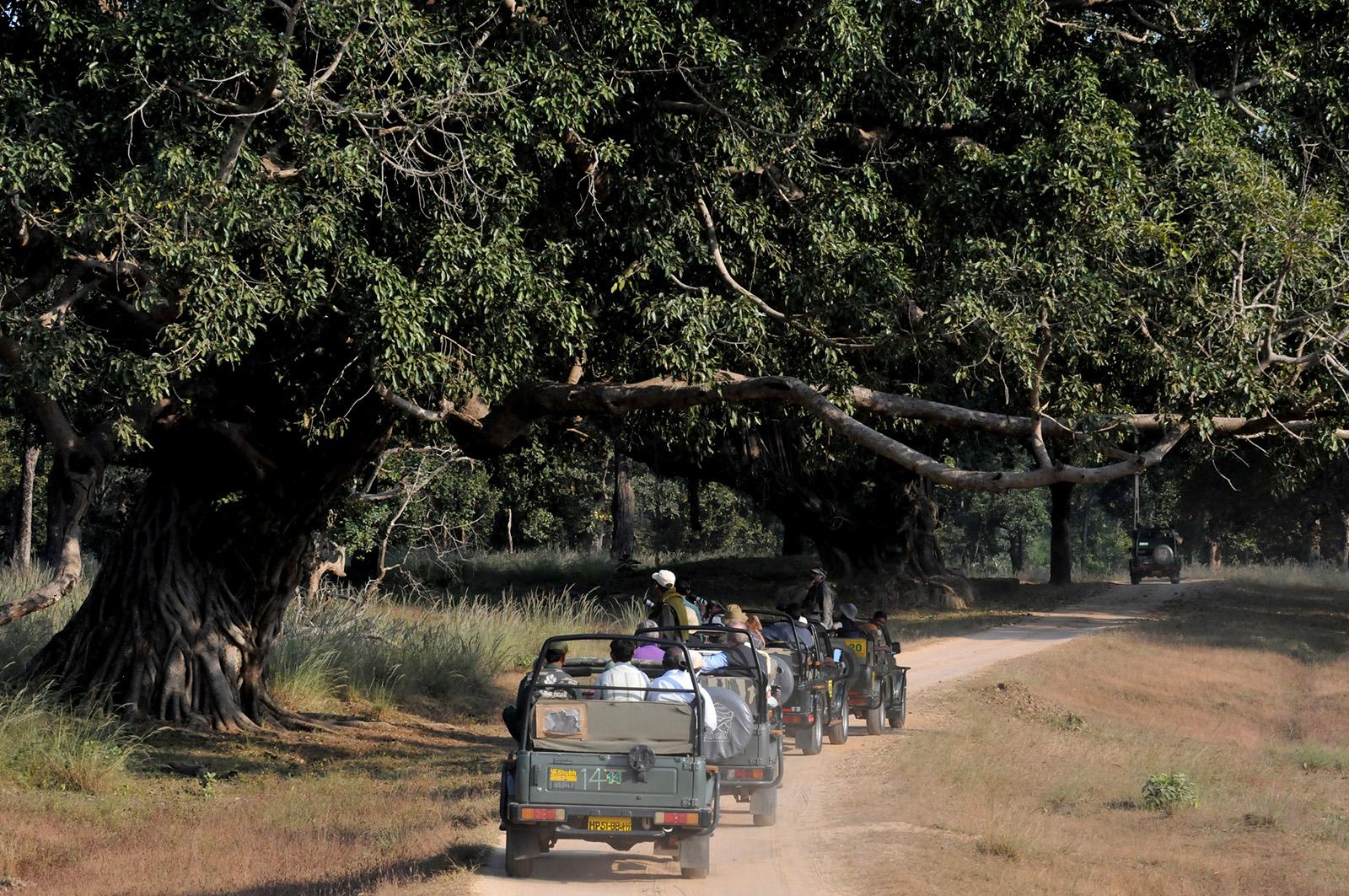 foto van vier jeeps die achter elkaar rijden door een safaripark