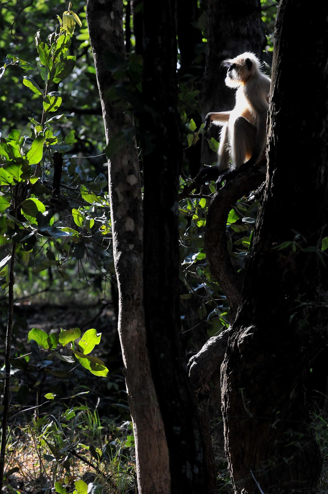 foto van aapje in de boom