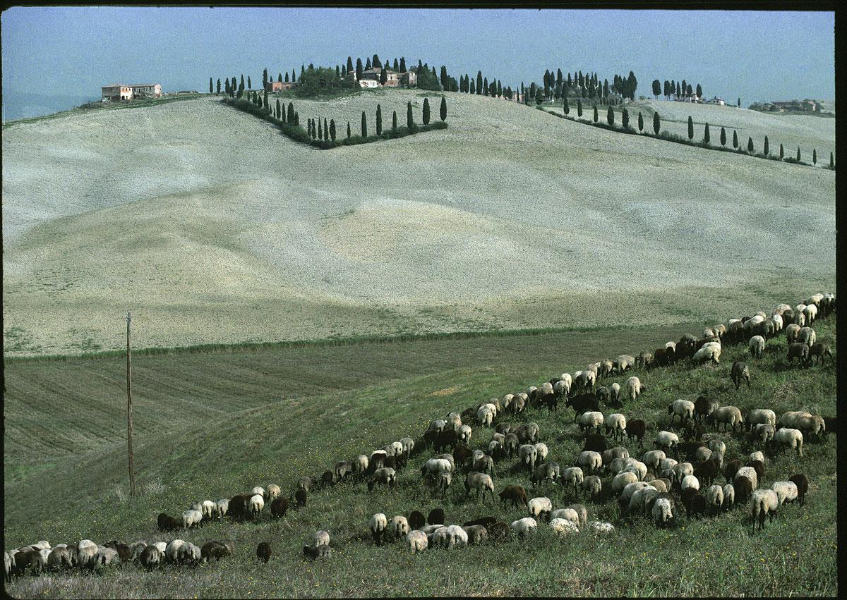 foto van  Peter van der Velde/MAI | Landschap met kudde schapen in Calabrië, Italië 1984