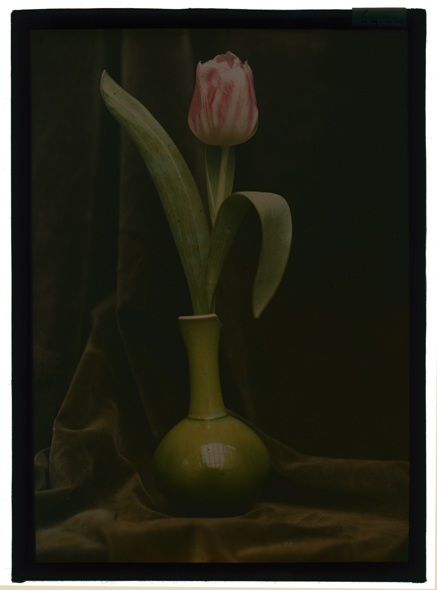 foto: Berend Zweers (1872-1946) - tulp in vaas