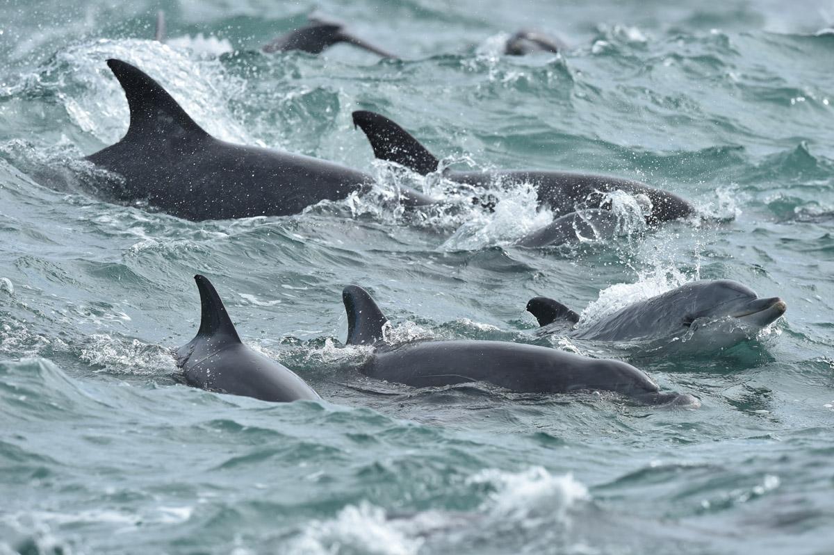 foto van zee close met dolfijnen