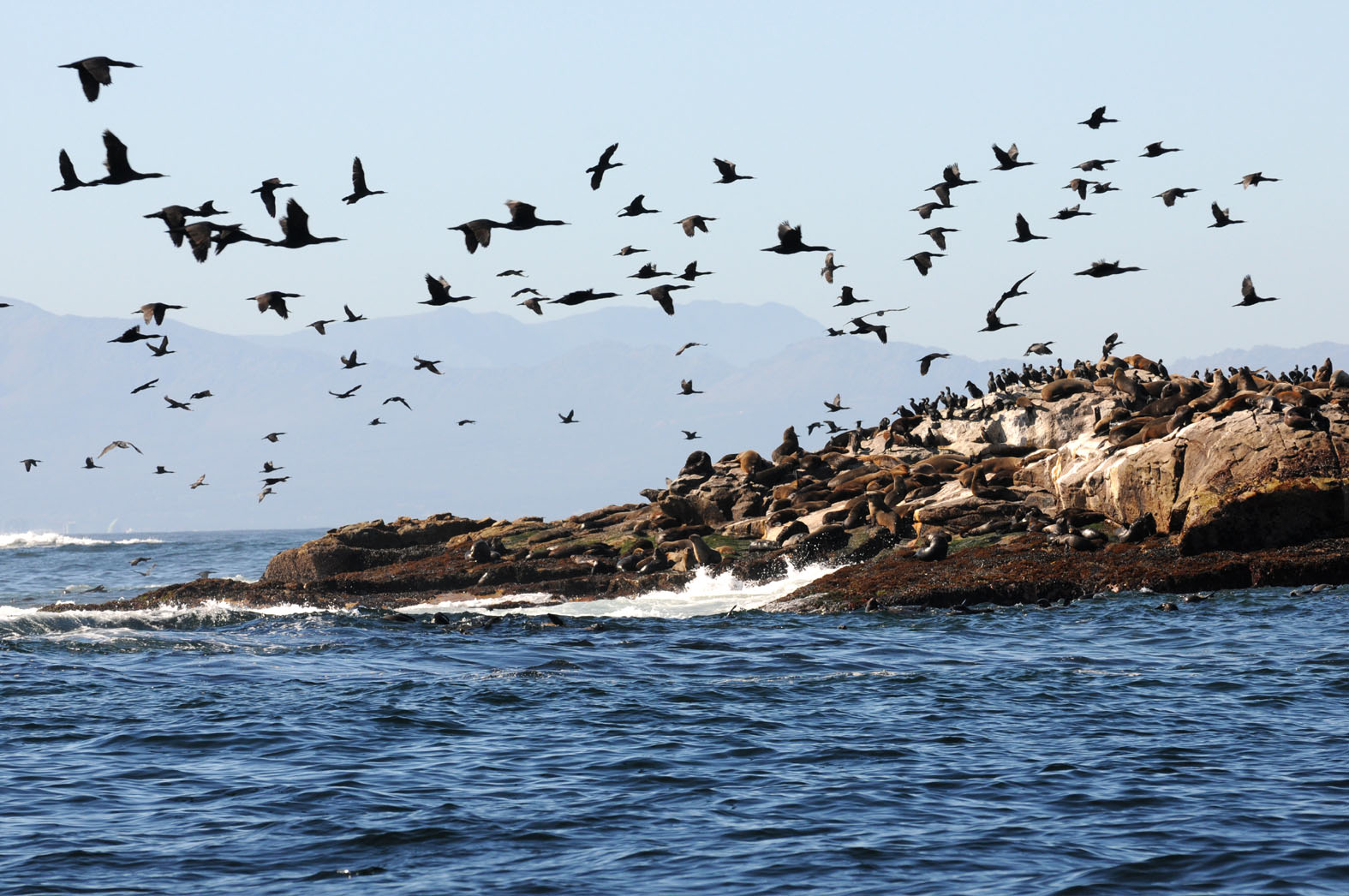 foto: Tom van der Leij van zee met vogels in Zuid-Afrika