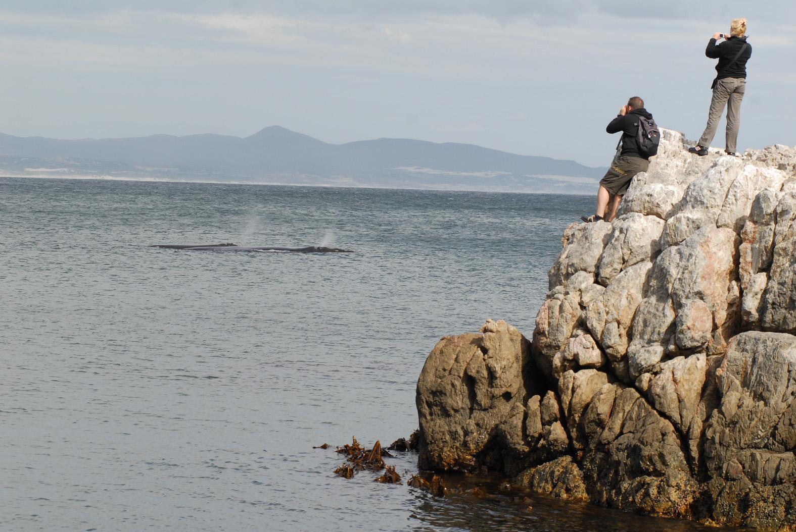 foto: Tom van der Leij | Walvissen fotograferen op rotsen bij zee