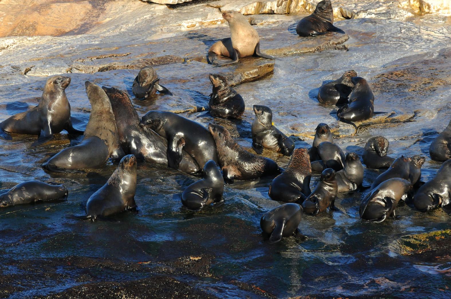 foto van zeehonden in water en bij rotsen