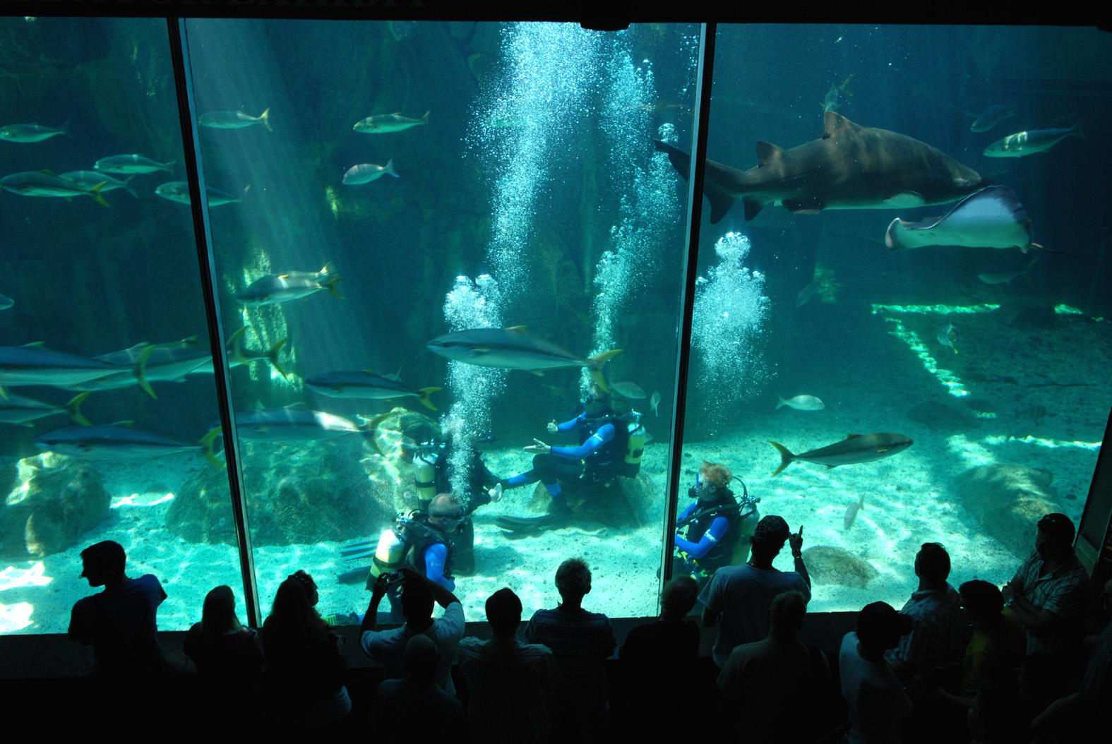 Het zeeaquarium van Kaapstad