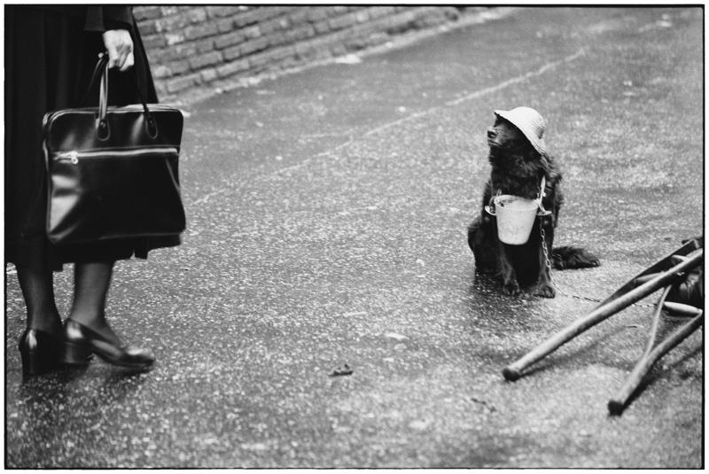 zwartwit foto van Erwitt Elliott van aapje met mutsje en bekertje om nek op straat die omhoogkijkt naar vrouw met tas en schoenen en hakken