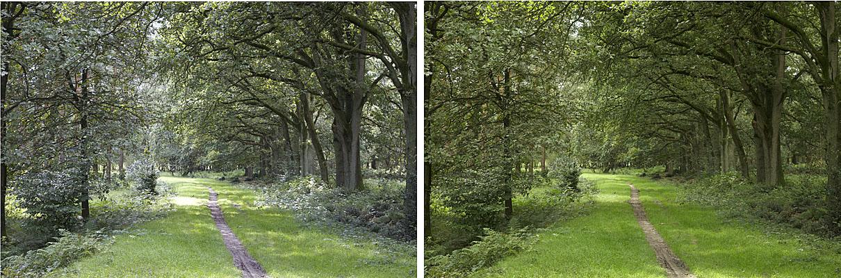 twee foto's parkje, links: automatische witbalans, rechts: witbalans met Expodisc. Beide opnamen diafragma F8, sluitertijd 1/50 S, -2/3 stop onderbelicht.
