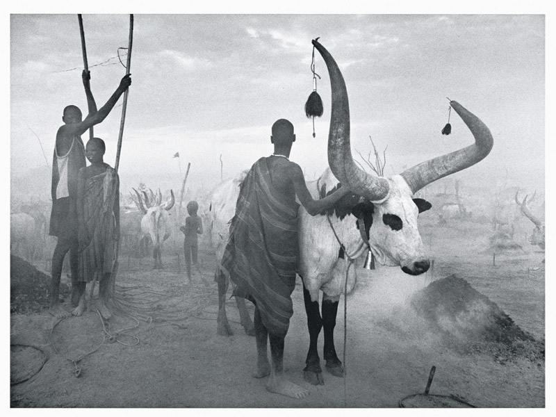 foto: Sebastião SALGADO / Amazonas images - Dinka group at Pagarau cattle camp. Southern Sudan, 2006.