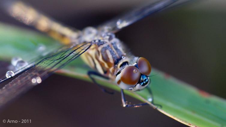 foto macro van een vlieg op een blad