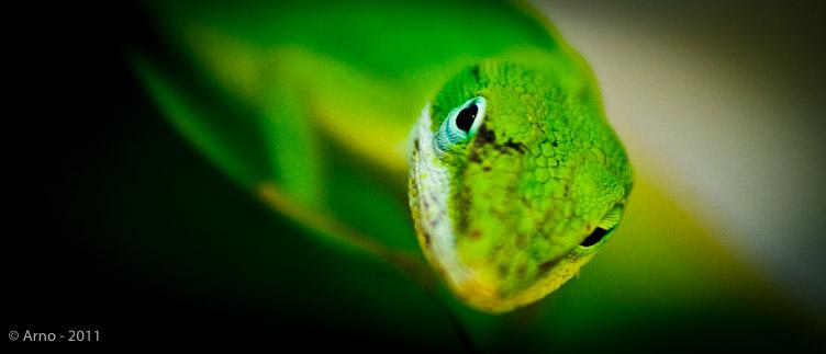 foto macro van salamanderkop