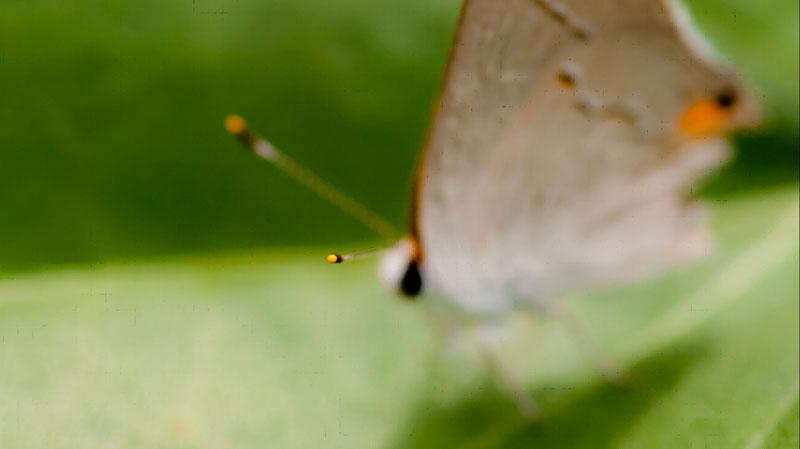 foto macro van vlinder