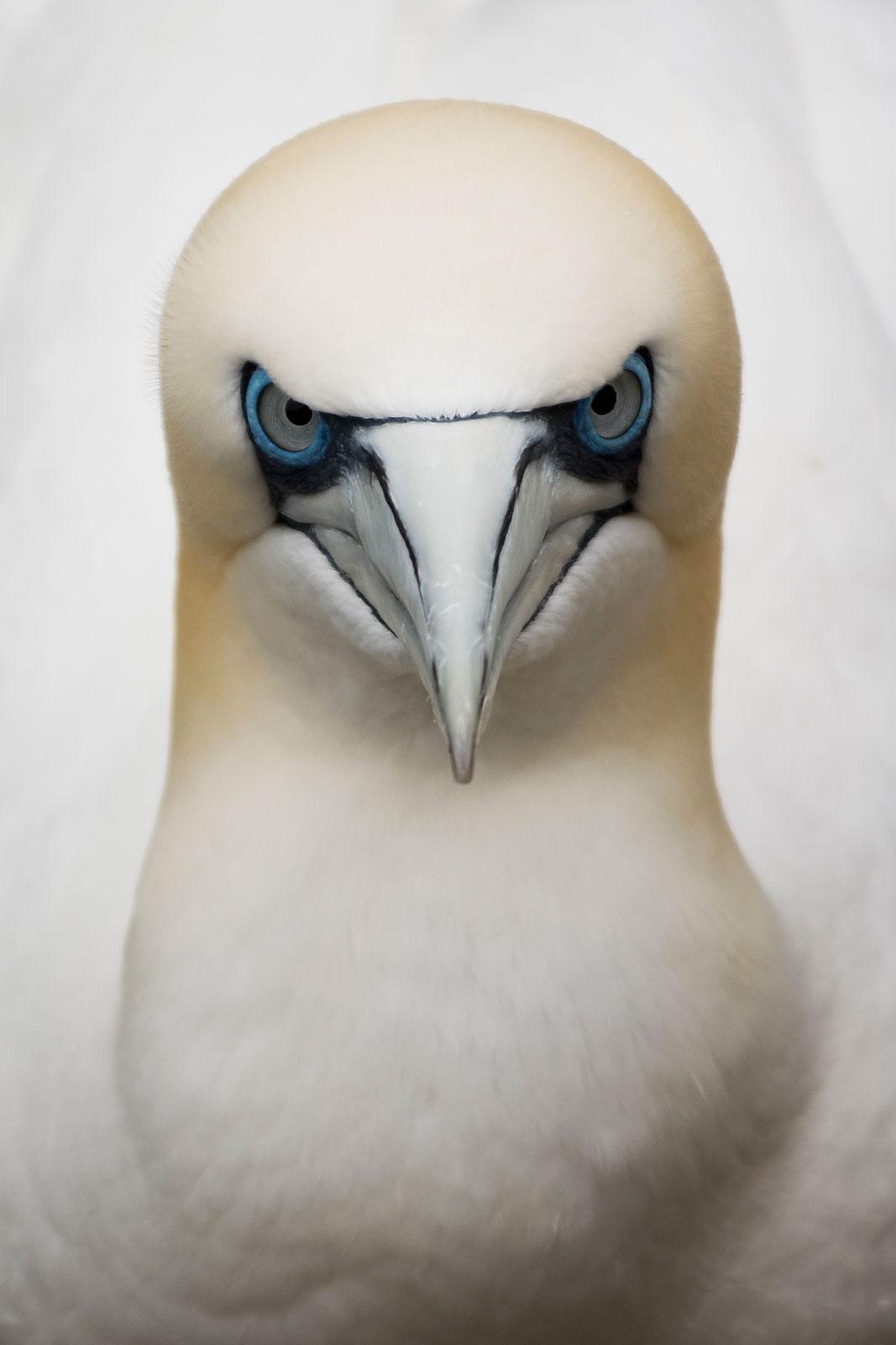 foto: © Eugene Kitsios, Netherlands, Shortlist, Open Competition, Wildlife, 2017 Sony World Photography Awards - Eye to eye