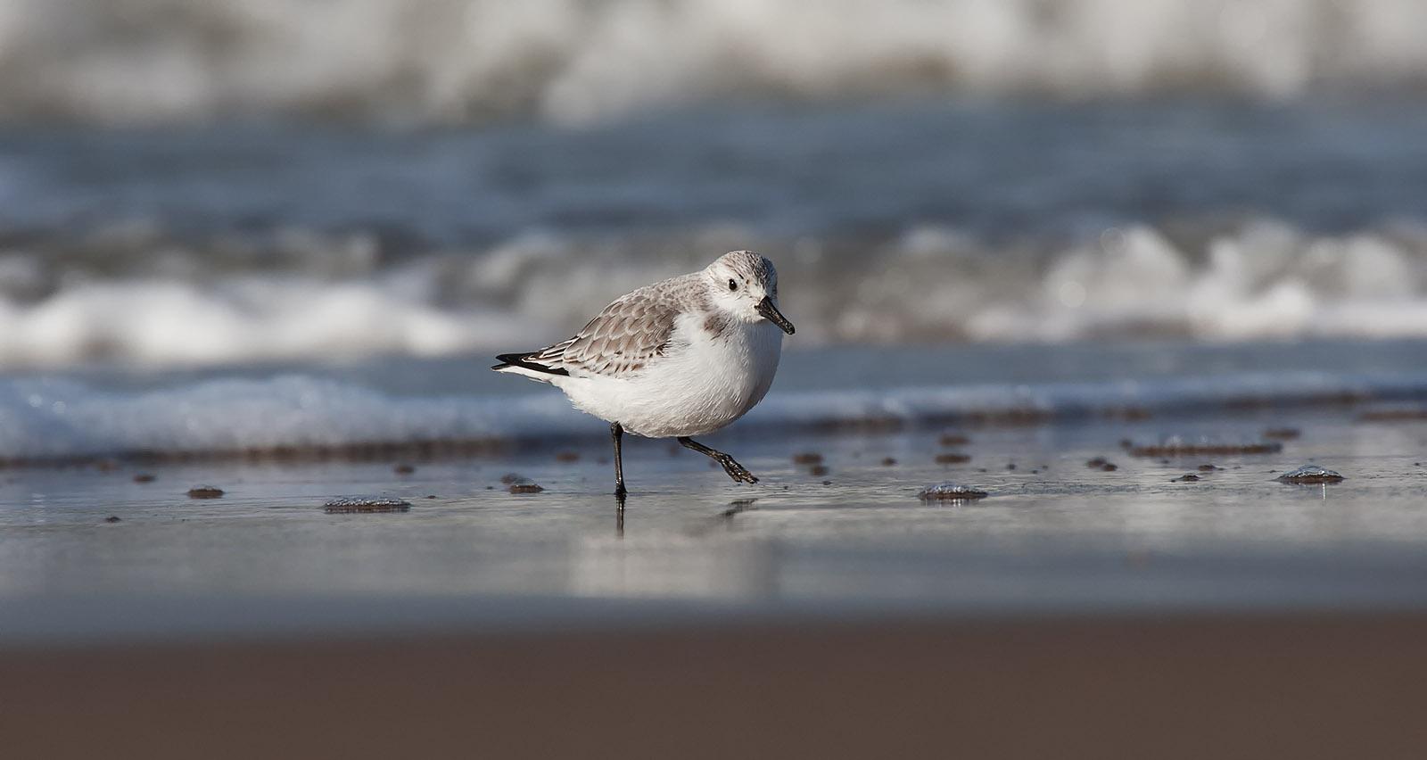 foto: Jan Duker | Drieteenstrandloper voor zeewater op het strand