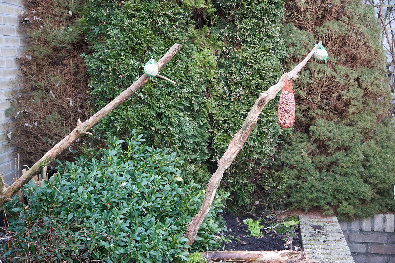 Inrichten van de voederplaats voor vogels