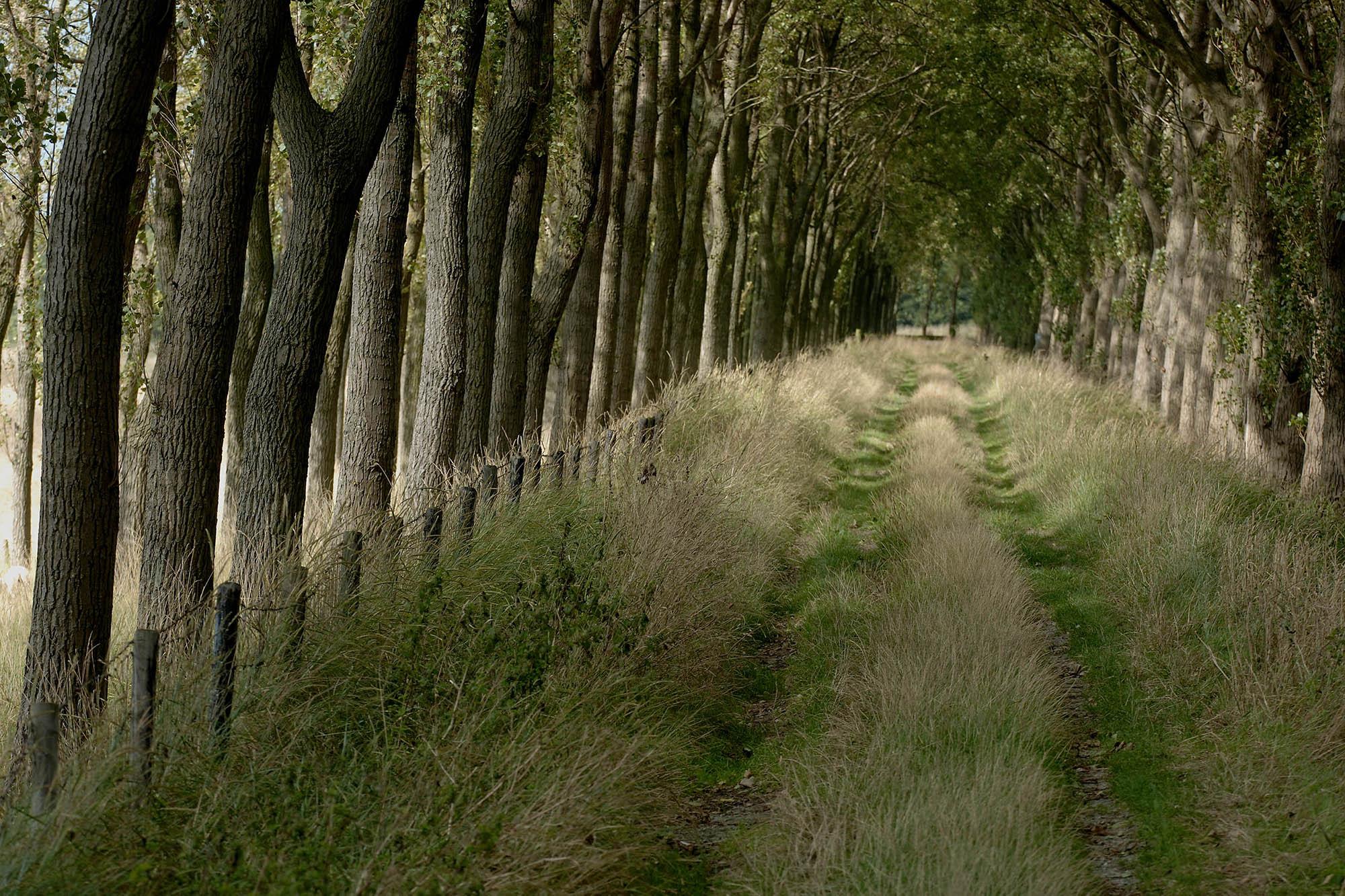 Gras en riet, pad in bos door Ben Seelt