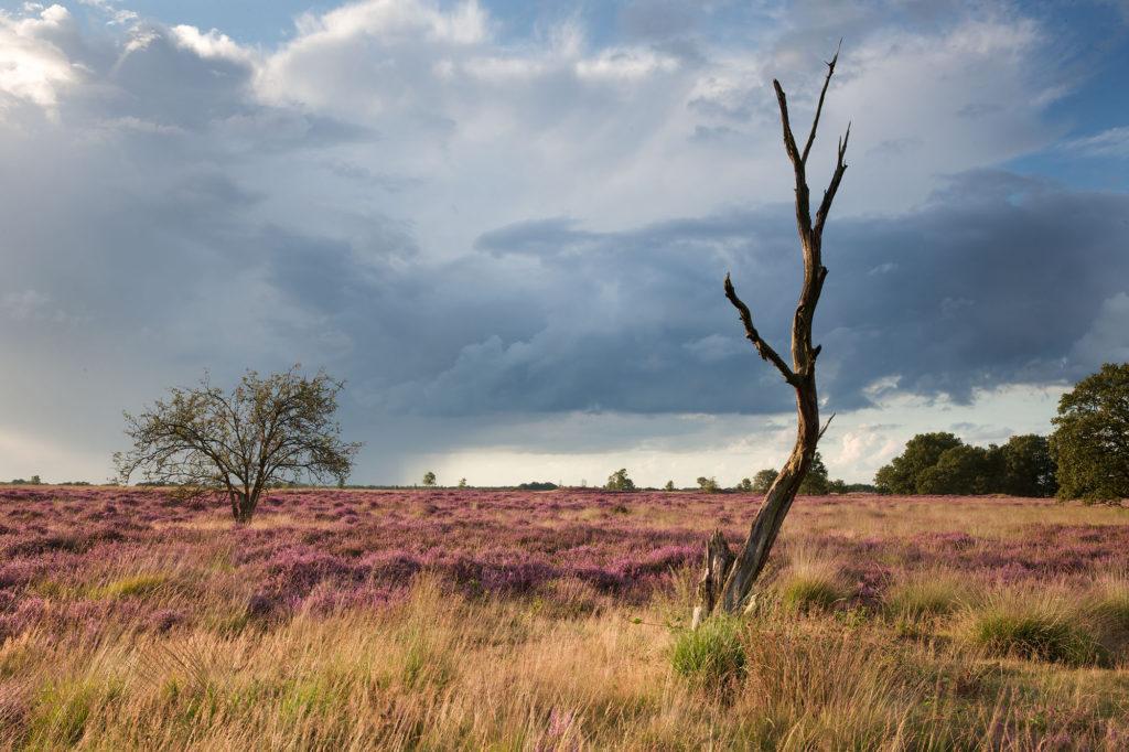 foto van landschap met heide en kale boom en lucht