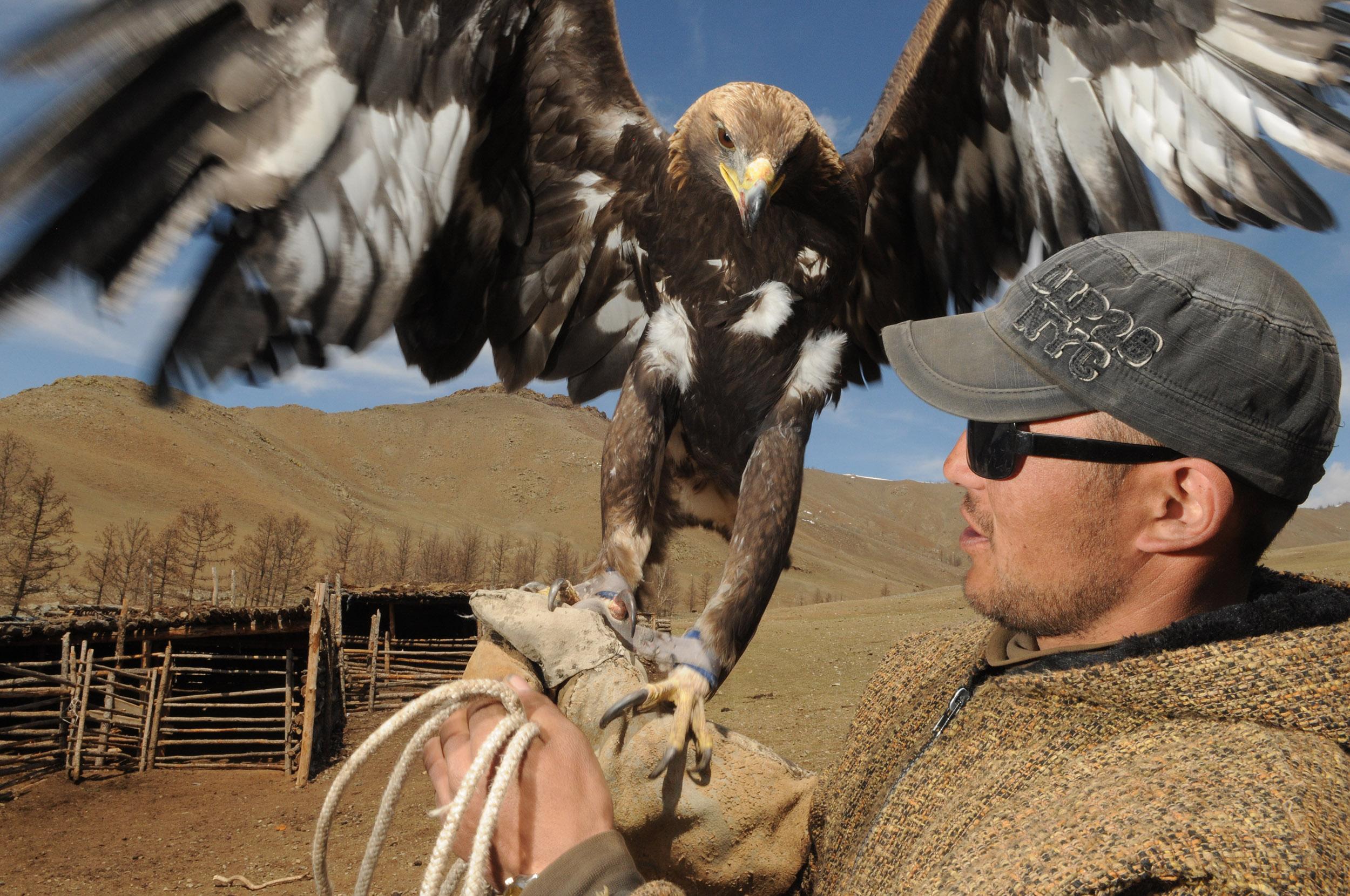 Man met grote steenarend op handen in Mongolië