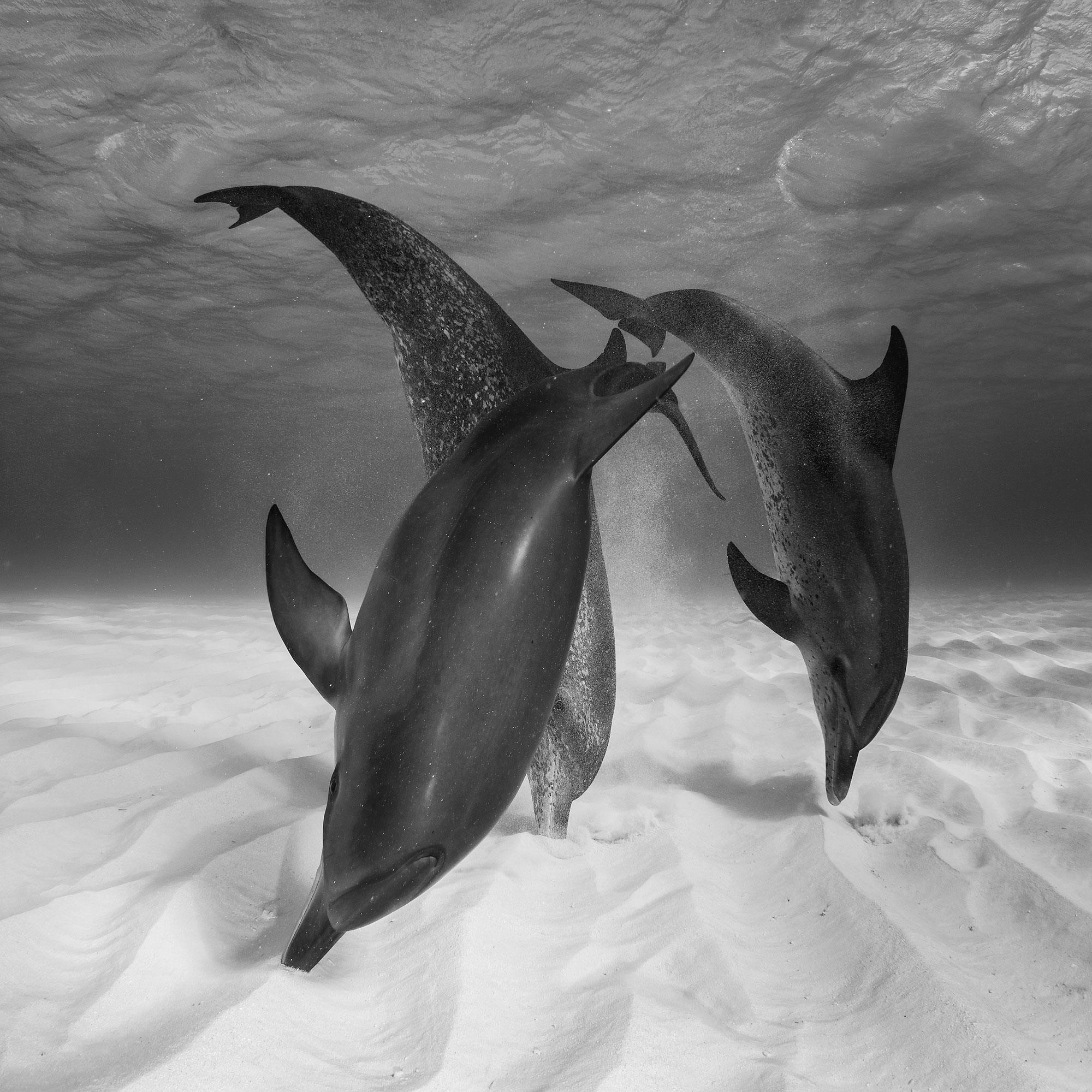 foto: ©Eugene Kitsios - Hunting dolphins, Netherlands National Awards 2017, 2017 Sony World Photography Awards