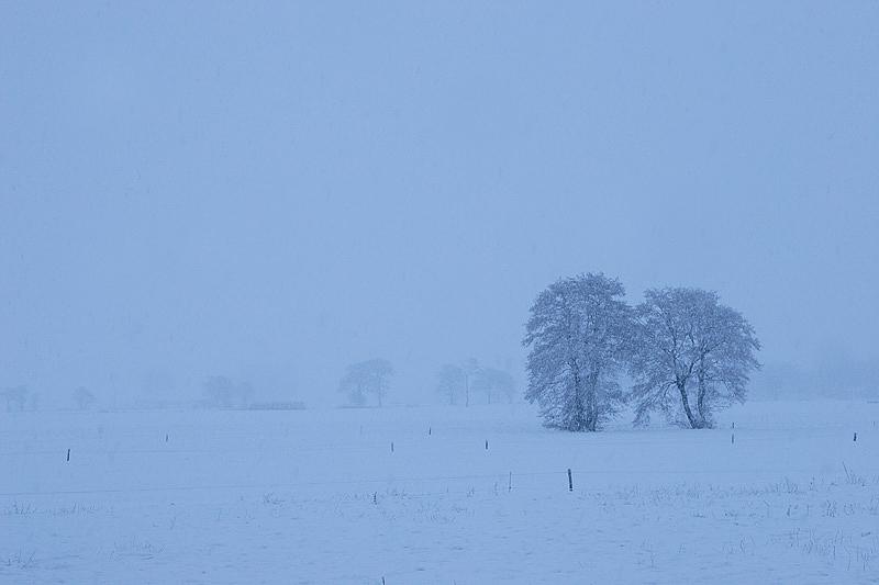 foto: Aaldrik Pot, bomen in de mist
