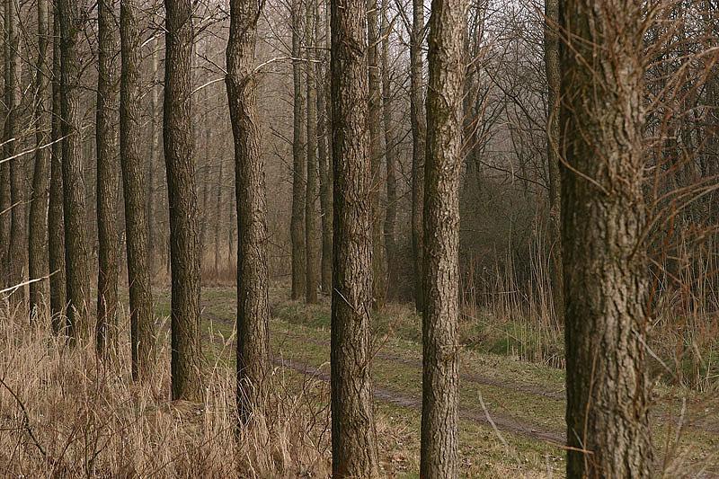 foto: Aaldrik Pot, bomen op een rij met pad erachter