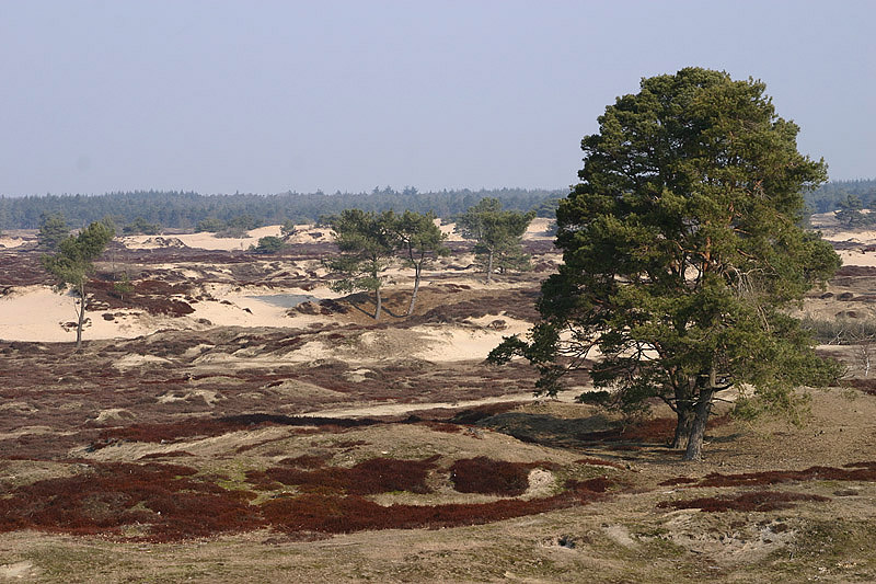 foto: Aaldrik Pot, boom in landschap