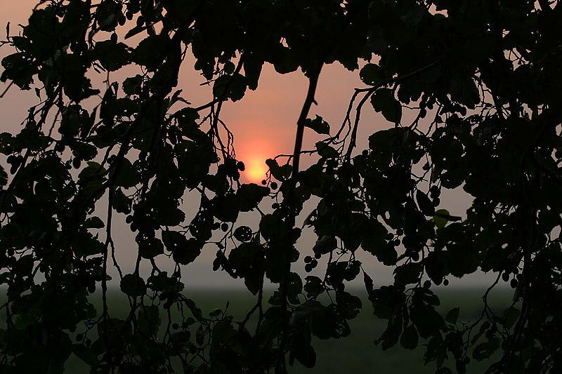 foto: Aaldrik Pot, takken van bomen met ondergaande zon erdoorheen