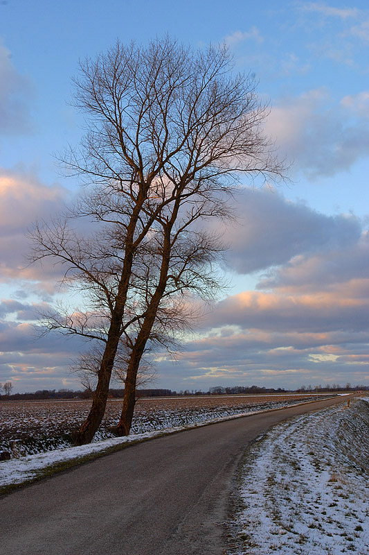 foto: Aaldrik Pot, twee bomen langs een weggetje in een sneeuwlandschap