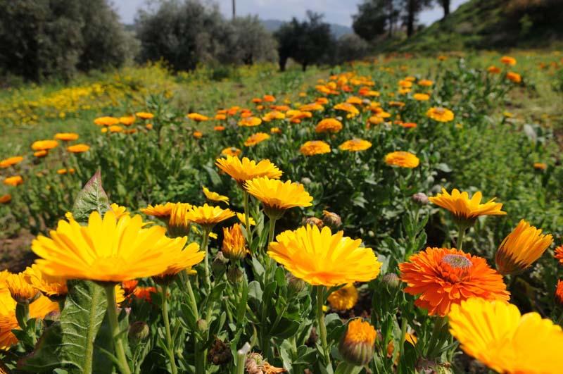 foto: Tom van der Leij - bloemenweide Cyprus