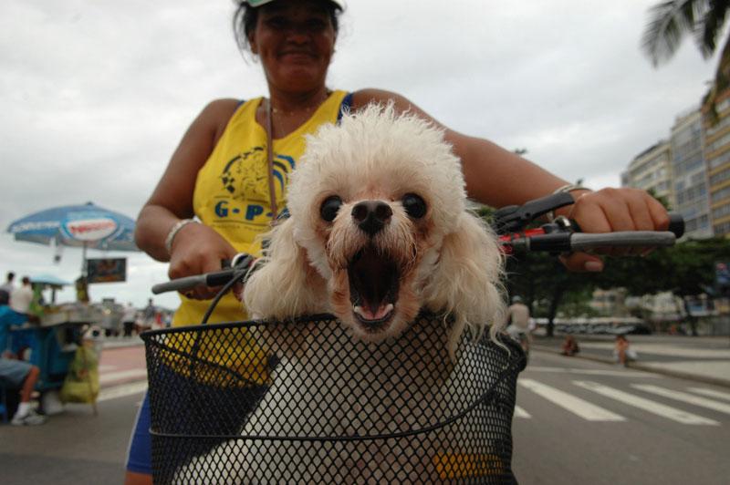 foto: Tom van der Leij - Rio de Janeiro, hond in fietsmand