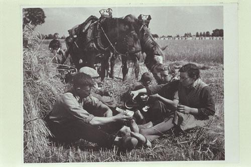 foto: Martien Coppens / Brabant-Collectie/UvT | Het hele gezin aan de oogst
