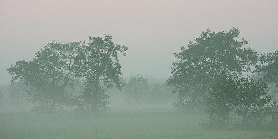 foto: Hillebrand Breuker | Mist en bomen