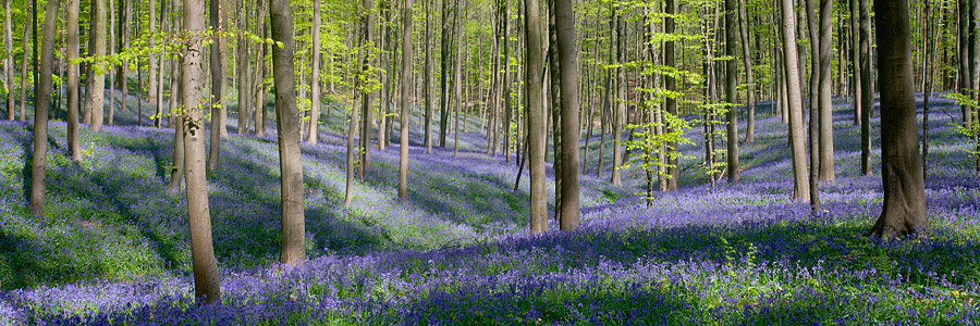 foto van Hillebrand Breuker - bos met paarse bloemen