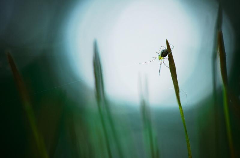 Een spin en zijn web.