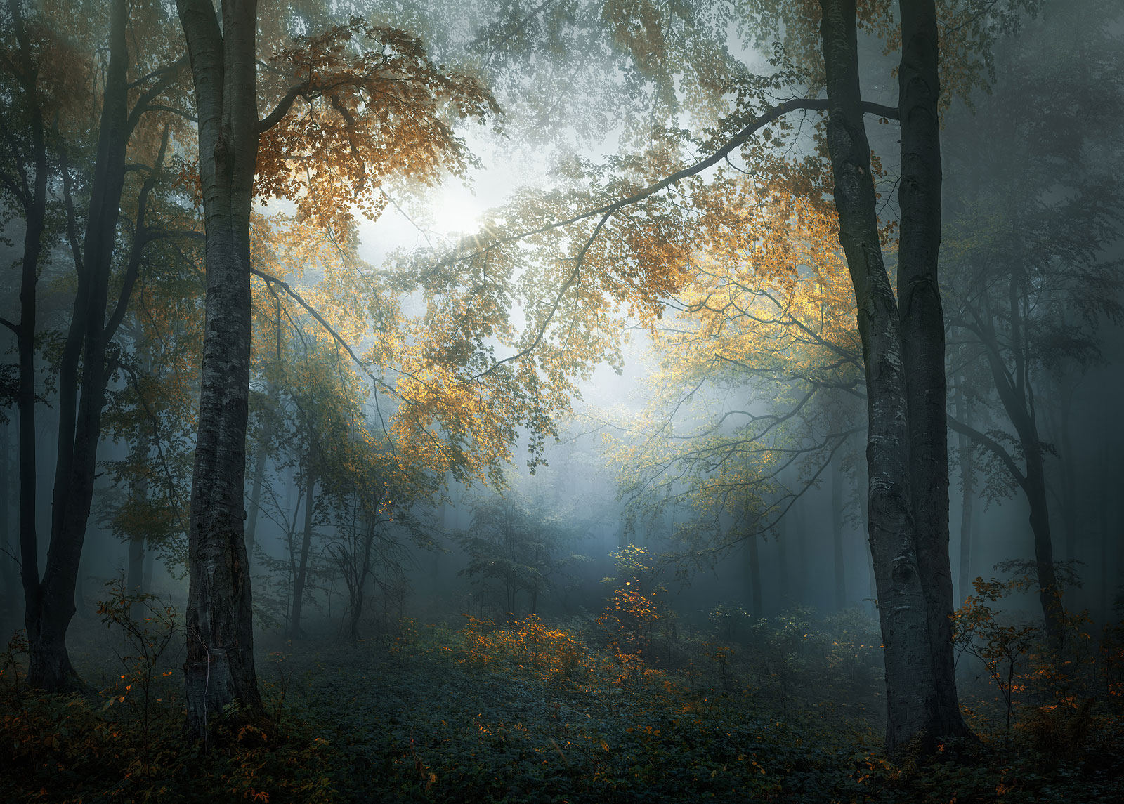 foto: © Veselin Atanasov, Bulgaria - Open, Landscape & Nature (2018 Open competition), Open Photographer of the Year, 2018, Sony World Photography Awards