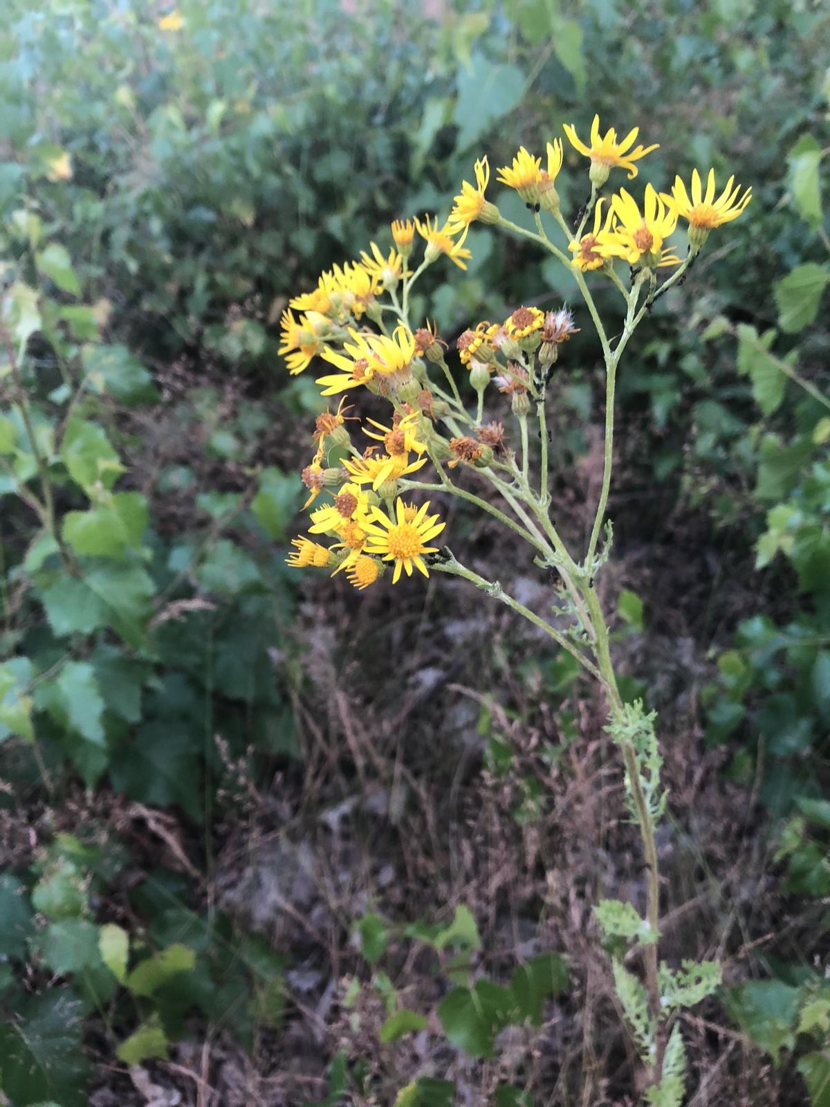 gele bloemen in aarde