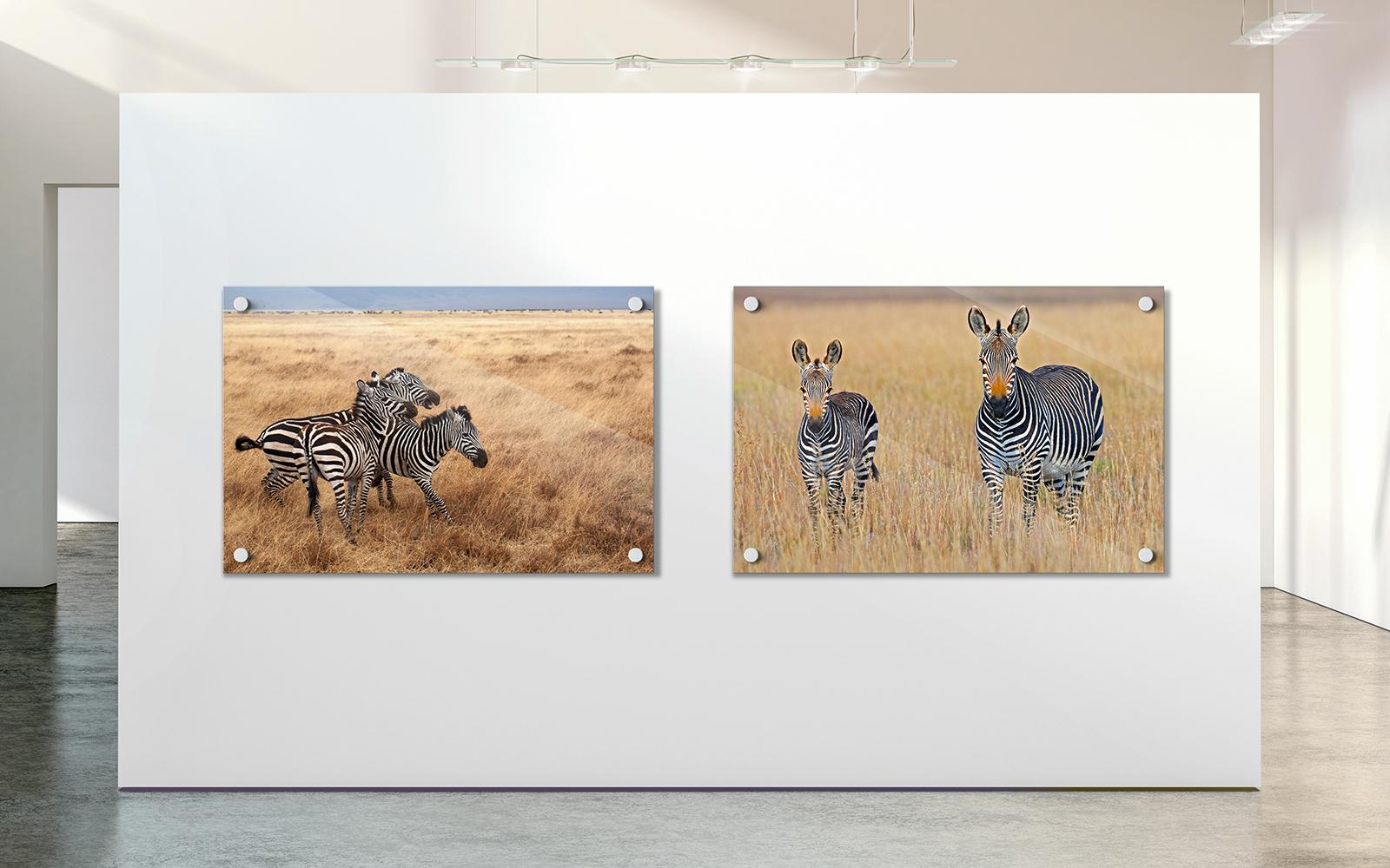 twee foto's van zebra's in galerie