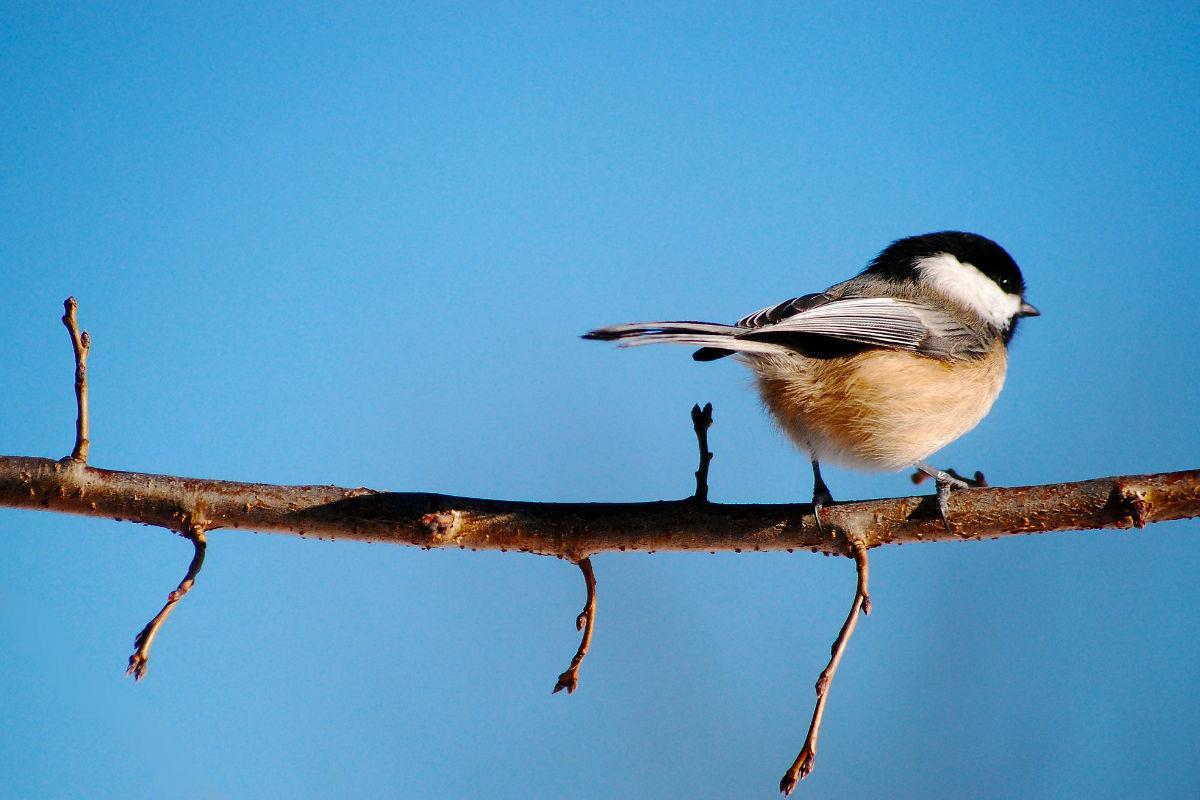 Jessica Bubb - Instagram: 200k+ - @rusticbones, vogeltje op tak met strakblauwe lucht