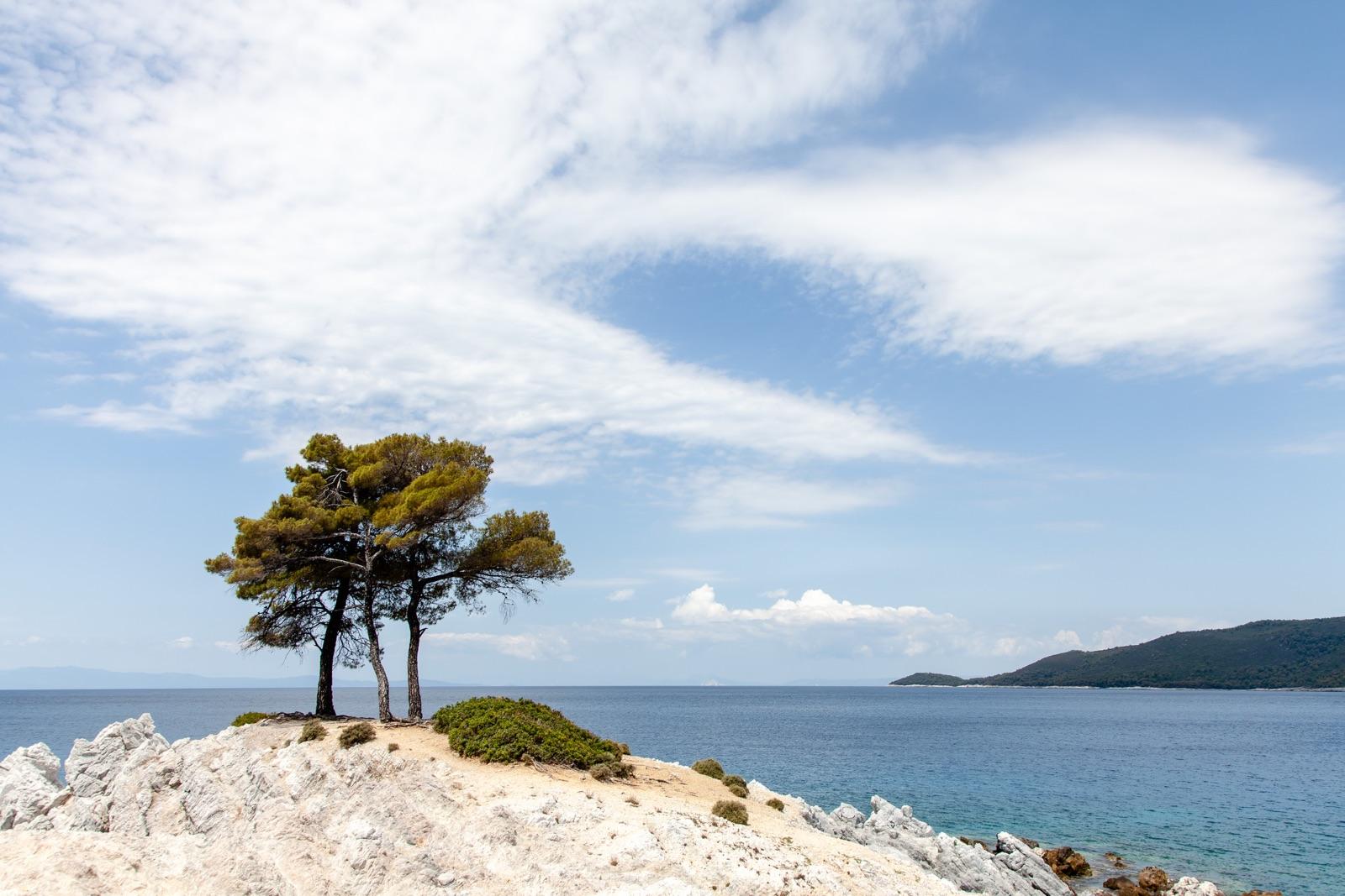 foto van Grieks eiland Skopelos, wat bomen op een wit gesteente bij de zee