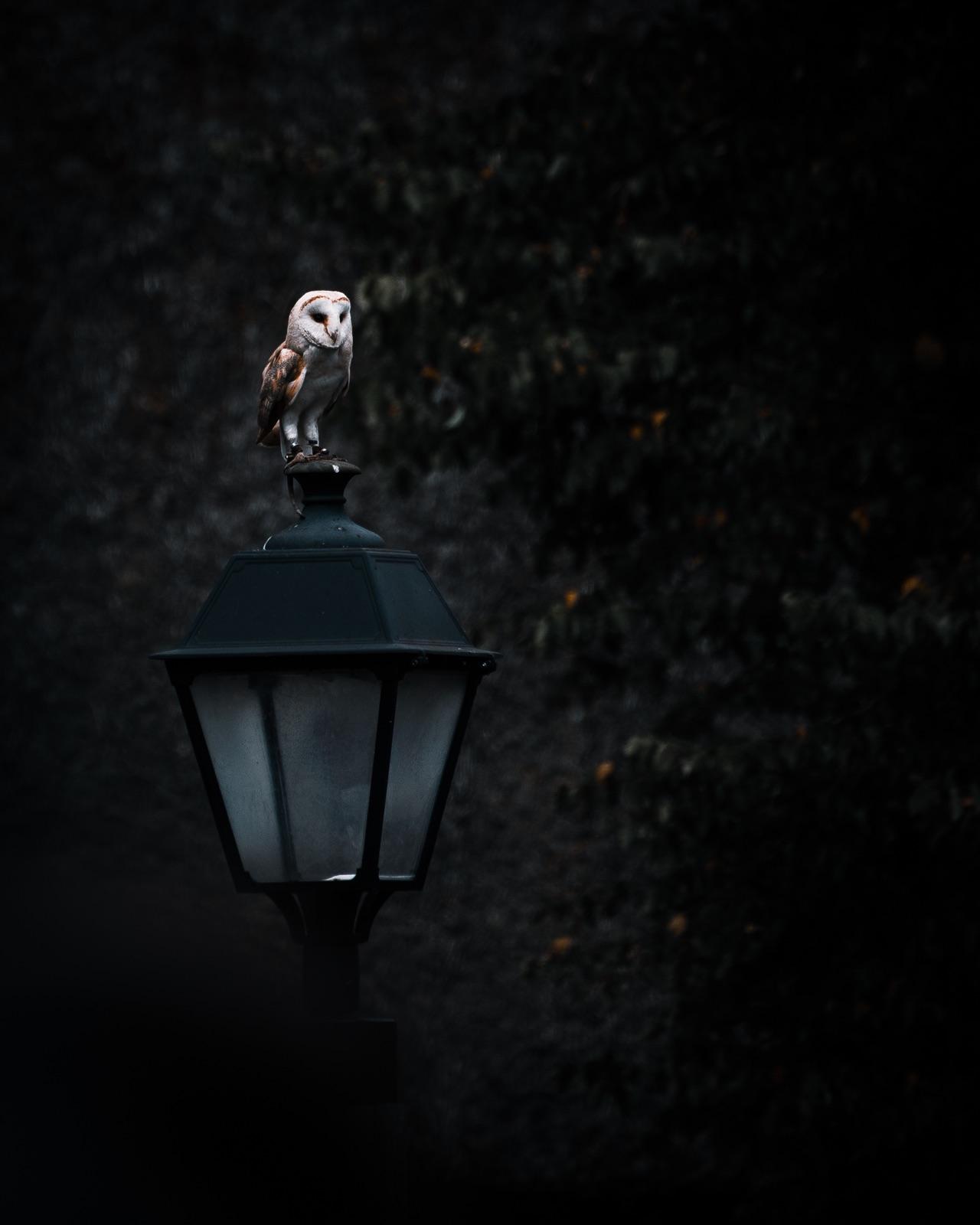 foto van een kerkuil op een lantaarn