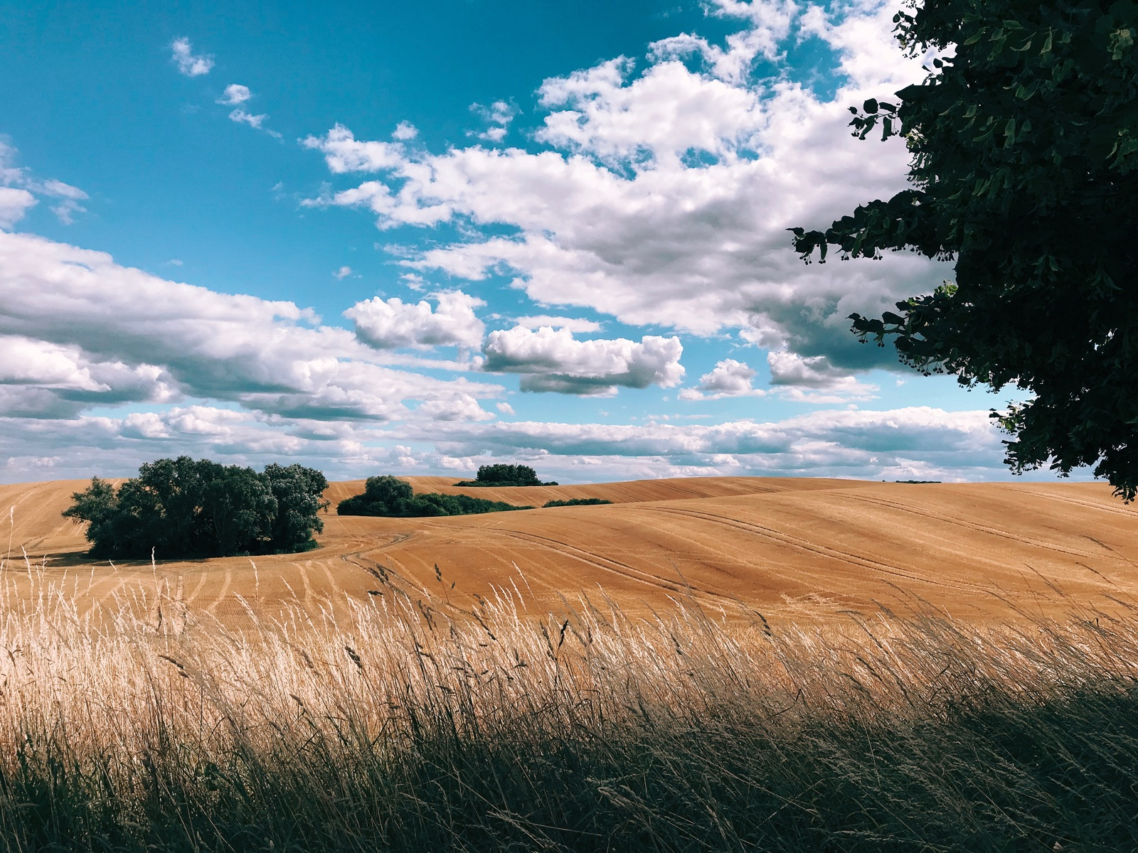 foto van een weide met struikjes en bomen en wolkjes in blauwe lucht