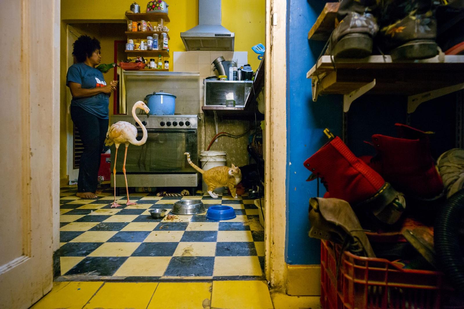 foto van een keuken met een vrouw en een flamingo erin, een opvanghuis voor gewonde dieren