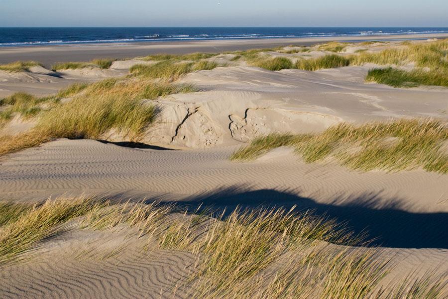 foto van een duinvlakte bij de zee