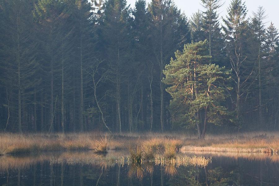 foto van ven in bos