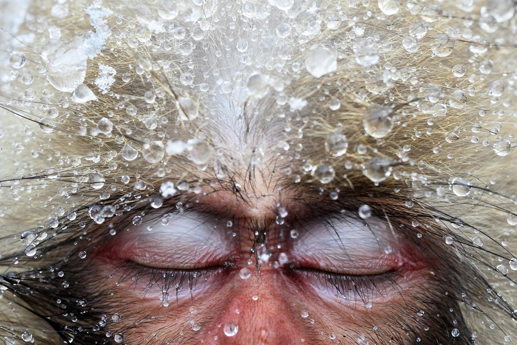 foto van Jasper Doest van aap met ogen gesloten en waterdruppels