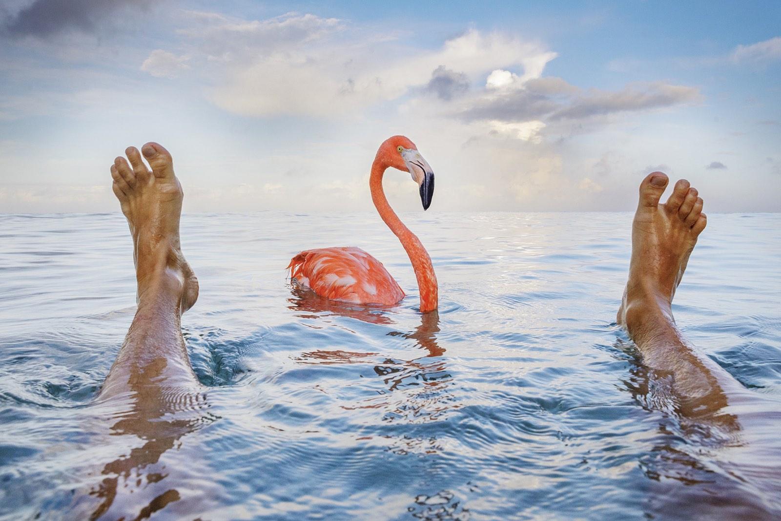 foto van Jasper Doest van twee voeten in water met flamingo ertussen