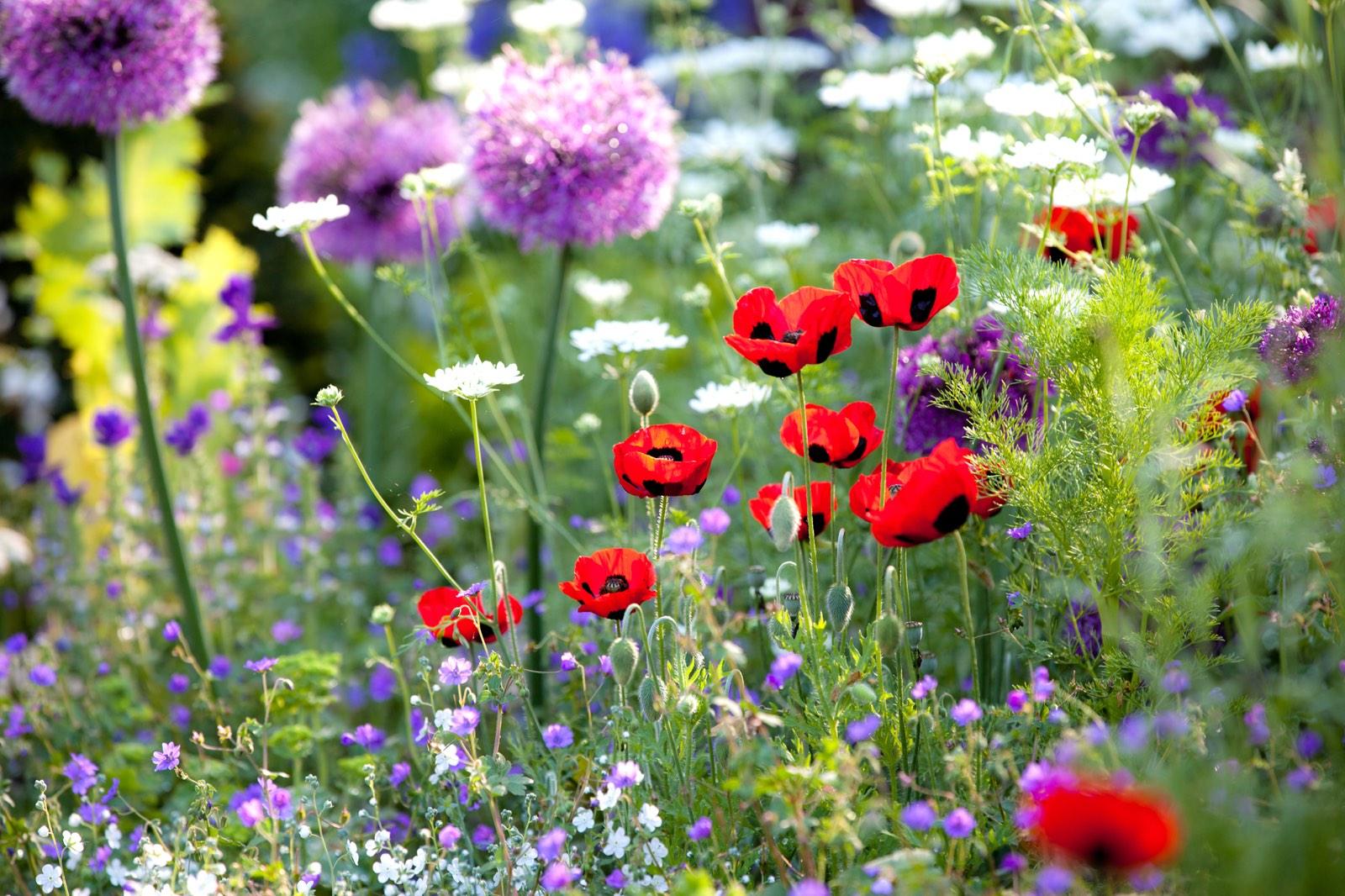 Bloemen buiten in verschillende kleuren close